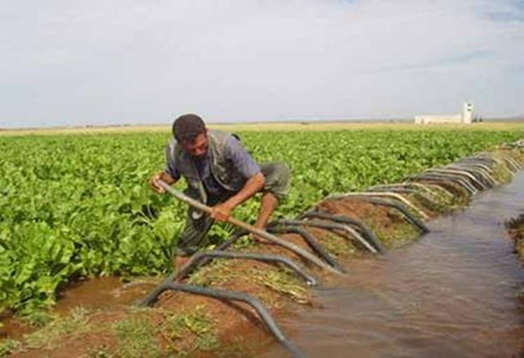 زرع أزيد من 248 ألف هكتار من الحبوب بجهة طنجة تطوان
