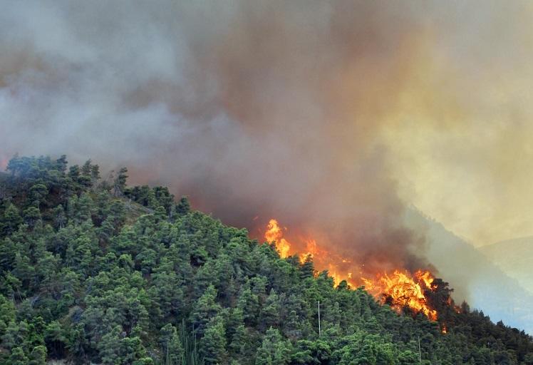 إخماد حريق غابوي بشفشاون أدى إلى إتلاف حوالي 7 هكتارات