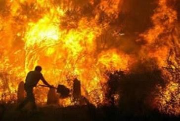 """القصر الصغير: حريق مهول يشب بغابة """"الدالية"""""""