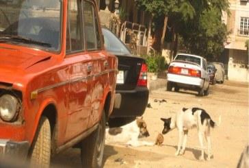 وزان: الكلاب الضالة تقلق راحة المواطنين