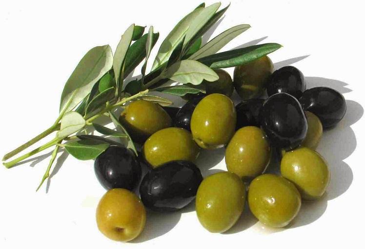شفشاون تحتضن يوما دراسيا حول واقع وآفاق إنتاج وتثمين سلسلة الزيتون