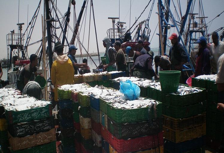 """ملف """"شهيد السمك"""" يكشف عن تواطؤ كبار مسؤولي وزارة الفلاحة مع """"مافيا"""" التهريب"""
