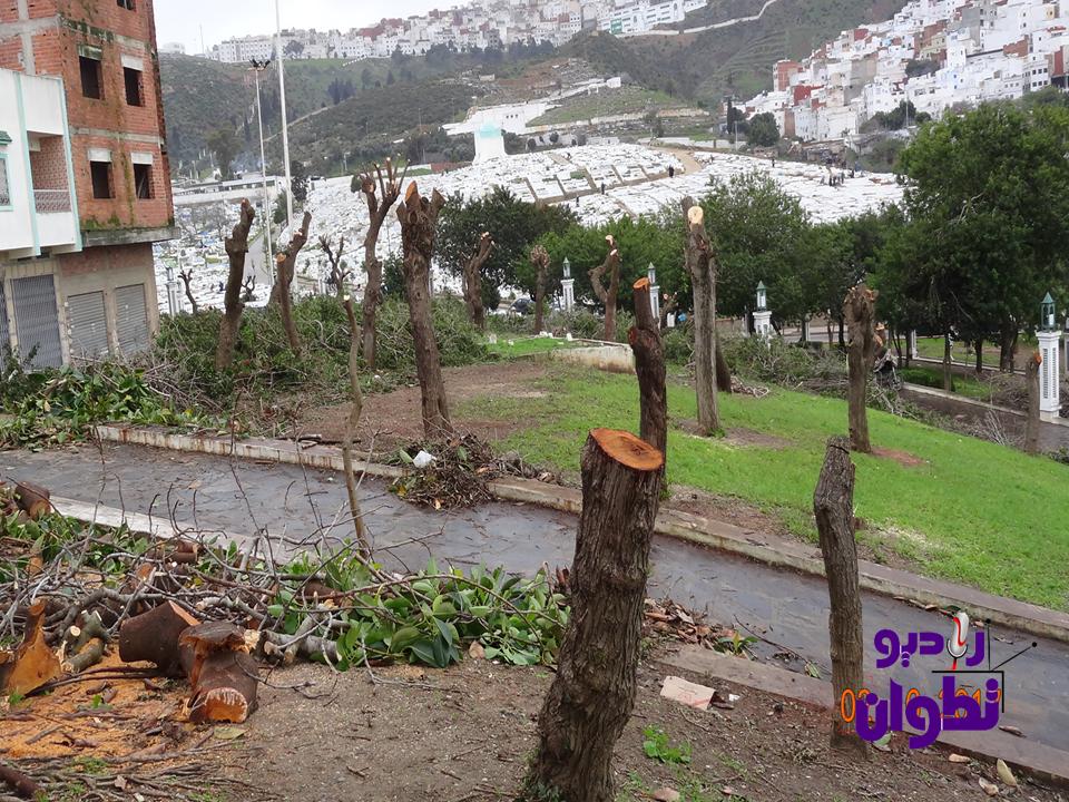 تطوان: جريمة ومجزرة بيئية تتعرض لها أشجار المدينة (بالصور)