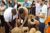 """جمعية """"متطوعون من أجل تطوان"""" تُطلق النسخة السابعة لمبادرة شراء أضحية العيد لفائدة الأسر المعوزة"""