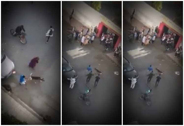 توقيف شخص هدد حياة تلاميذ مؤسسة تعليمية بكلب في الدار البيضاء- فيديو