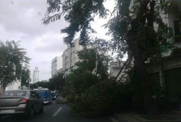 بالصور: رياح قوية تقتلع الأشجار ولافتات وتذب الخوف في نفوس المواطنين في تطوان