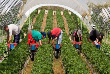 إسبانية تبحث عن آلاف العمال المغاربة لجني محاصلها